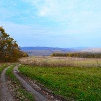 Лесная дорога :: Виктор Шандыбин