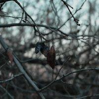 Дети ноября :: Анна Куценко