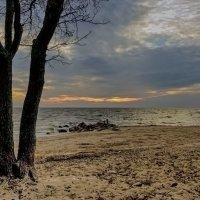 Дерево на заливе :: Valerii Ivanov