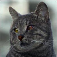 Кошачье чудо-«Кошки очарование мое!» :: Shmual Hava Retro