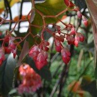...цветы... :: Мария Букина