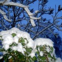 утро после первого снега :: Александр Прокудин