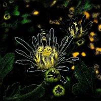 Хризантемовый рай :: Нина Корешкова