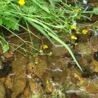 любимая речка Ягодная :: helga 2015