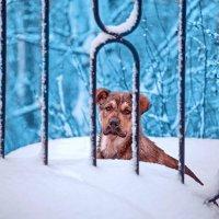Бездомный щенок. :: Алексей Хаустов