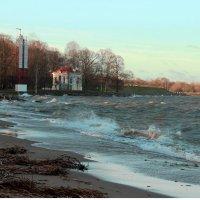 Декабрьская прогулка по Петергофу. На берегу Финского залива :: Вера Моисеева