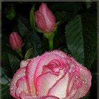 Розовый жемчуг :: Эля Юрасова
