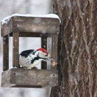 Однажды зимним днем.. :: Ната Волга