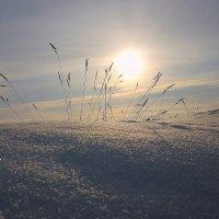 На небе солнце, серебрится снег... :: Павлова Татьяна Павлова