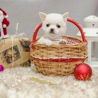 Новогодний сувенир :: Катерина Терновая