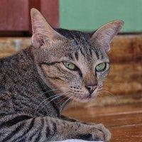 о чем догадывается кошка ? :: Dmitry i Mary S