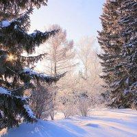 В зимнем лесу :: И.В.К. ))