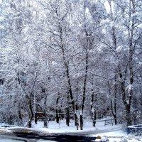 Однажды зимним днем :: Елена Семигина