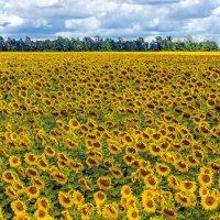 Целое море цветов :: Любовь Потеряхина
