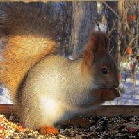 В лесной столовой . :: Мила Бовкун