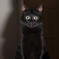 то ли кошка, то ли сова :: Эмиль Абд