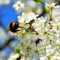 Просто весна. :: vkosin2012 Косинова Валентина