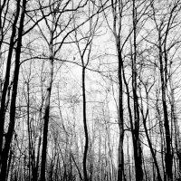 Усталый лес. :: Валерия  Полещикова