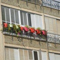 на балконе :: Ефим Хашкес