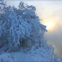 В снежной шубе :: Мария Кухта