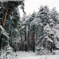 Добро пожаловать в Зиму... :: ВладиМер