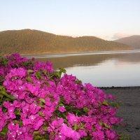 Острова Уитсандей :: Антонина