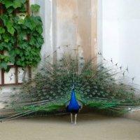 Валдштейнский сад в Праге :: Наиля