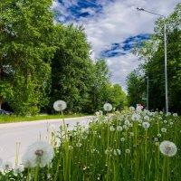 Лето..зелень..небо и одуванчики)))) :: maxihelga ..............