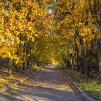 Я ухожу в осеннюю аллею... Бреду неспешно, листьями шурша... :: Андрей Нибылица