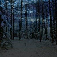 Зимний лес при лунном свете :: Милешкин Владимир Алексеевич