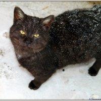 Зимний котэ :: Андрей Заломленков
