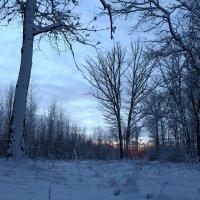 Сумерки в зимнем лесу :: Владимир Протасов