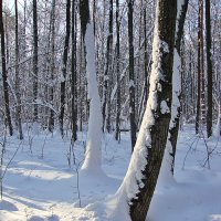 В лесу :: Лидия (naum.lidiya)