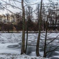 зима пришла :: Лариса *