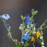 Букет полевых цветов :: Виктор Алеветдинов