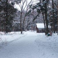 зима :: Наталья Литвинчук