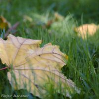 Осенний этюд :: Виктор М