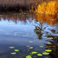 Даниковское озеро.Отражение :: Валерий Талашов