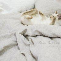 Главное уютно лечь и потом как попрет...) :: Дарья