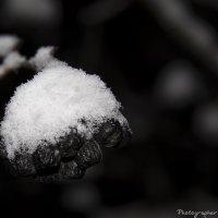 Снежные ягоды :: Виктор М