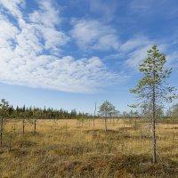 Кольское болото :: Владимир
