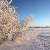 Красота севера :: Marina Pelymskaya