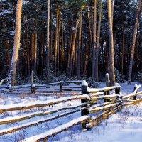 Пахнет лес уставшим снегопадом... :: Лесо-Вед (Баранов)