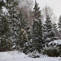 Декабрь :: Наталья Тагирова