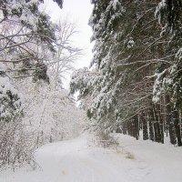 В заснеженном лесу. :: Мила Бовкун