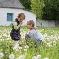 Одуванчиковое детство :: Андрей Майоров