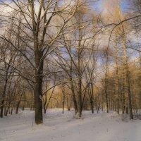 Акварели зимы :: Наталья Лакомова