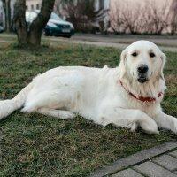 Dog :: Николай Н