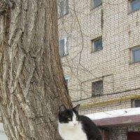 пейзаж с котом :: tgtyjdrf