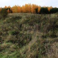 Лохматые травы.... :: Валерия  Полещикова
